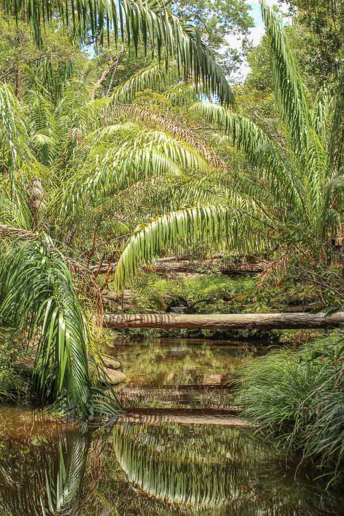 Bako National Park, Sarawak, Malaysia, Borneo, Malaysian Borneo, Malaysia National Park, Borneo National Park, Sarawak National Park, Bako, off the beaten path Asia