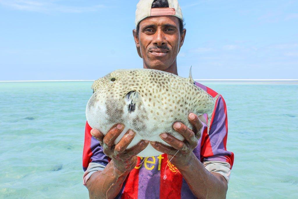 travel to Socotra, travel in Socotra, Socotra, Socotra Island, Yemen, Socotra Yemen, Socotra Island Yemen, Yemen Island, Yemen islands, Socotra Archipelago, Yemen, detwah lagoon, detwah lagoon socotra, detwah socotra, detwah, socotra fish