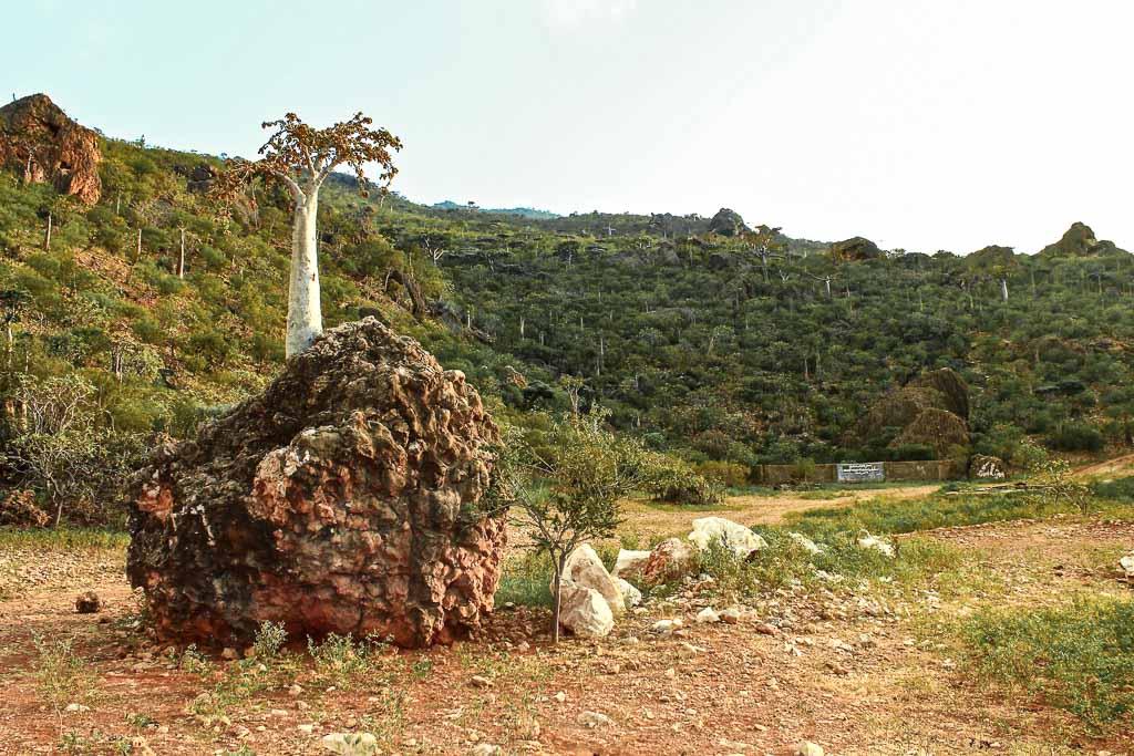 10 days socotra, travel in Socotra, Socotra, Socotra Island, Yemen, Socotra Yemen, Socotra Island Yemen, Yemen Island, Yemen islands, Socotra Archipelago, Yemen, cucumber tree