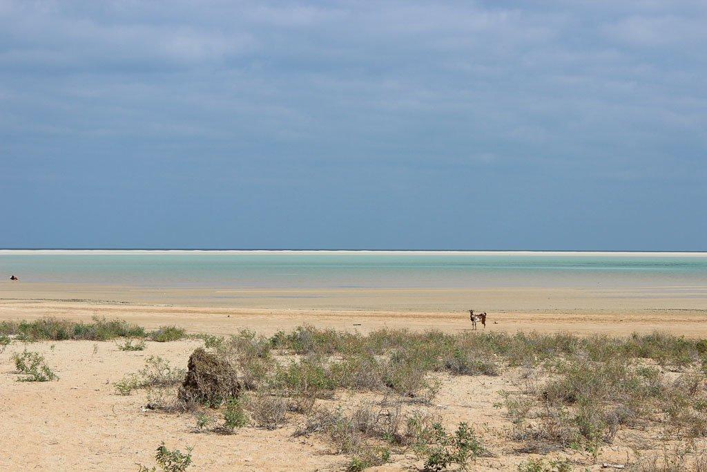 travel to Socotra, travel in Socotra, Socotra, Socotra Island, Yemen, Socotra Yemen, Socotra Island Yemen, Yemen Island, Yemen islands, Socotra Archipelago, Yemen, detwah lagoon, detwah lagoon socotra, detwah socotra, detwah