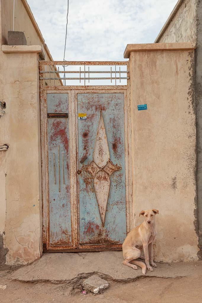 Dog, Hormuz, Hormuz Island, Iran