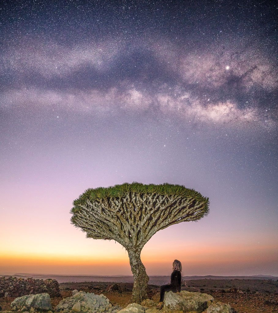 Socotra, Socotra Island, Yemen, Socotra Archipelago, Dragon Blood Tree, Dracaena Cinnabari, milky way, Milky way dragon blood tree, milky way yemen, milky way Socotra
