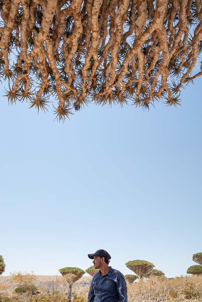 Socotra, Socotra Island, Yemen, Dragon blood tree, Dracaena Cinnabari, Firhman, Firmin, Firmin Forest, Firhmin Forest