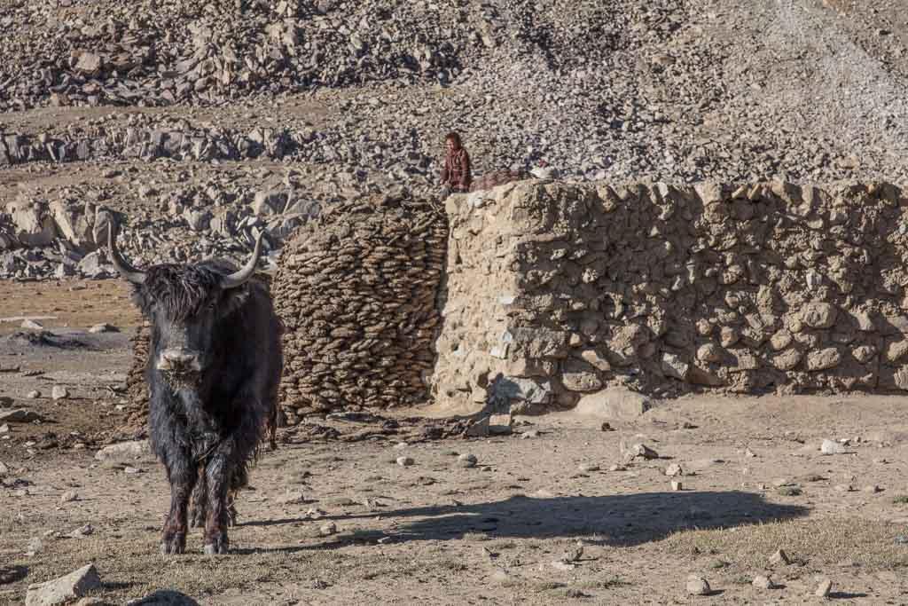 Wakhan photos, photos Wakhan, yak, Afghanistan yak, Afghanistan, Great Pamir, Great Pamir Afghanistan, Wakhan, Wakhan Valley, Wakhan Afghanistan, Wakhan Corridor