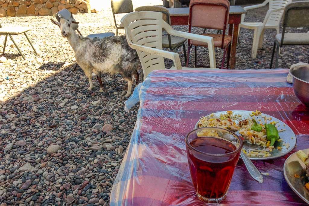 travel to Socotra, hadiboh, hadiboh socotra, travel in Socotra, Socotra, Socotra Island, Yemen, Socotra Yemen, Socotra Island Yemen, Yemen Island, Yemen islands, Socotra Archipelago, Yemen, taj restaurant socotra, taj socotra, goat socotra, hungry goat