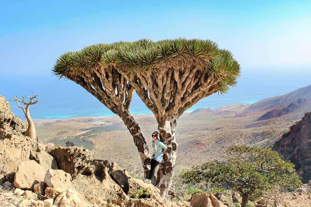 travel to Socotra, travel in Socotra, Yemen, Socotra, Socotra Island, Yemen, Socotra Yemen, Socotra Island Yemen, Yemen Island, Yemen islands, Dragon Blood Tree, Dracaena cinnabar, women dragon blood tree, girl dragon blood tree, Socotra Archipelago, Homhil, Homhil Protected Area