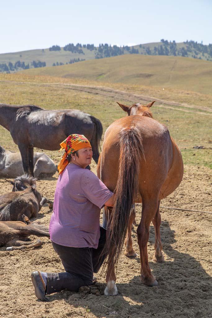Karkyra, Kyrgyzstan, Karkara, Karkara border crossing, horse, horse milk, kumis, horse milking