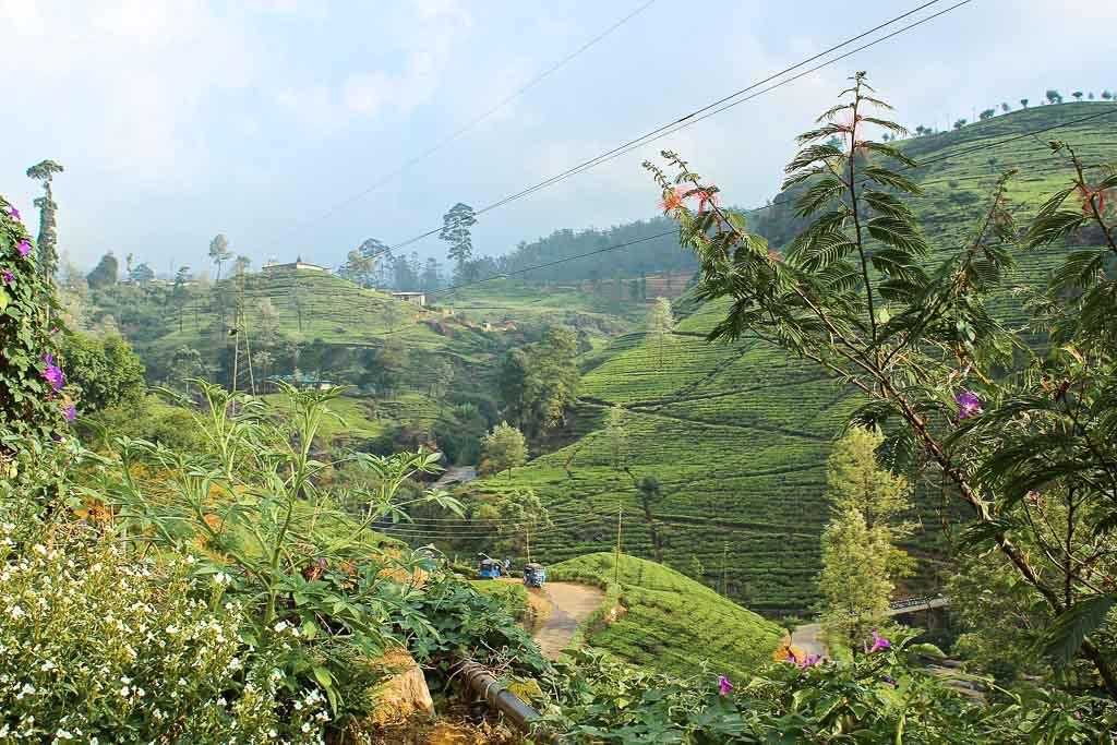 Sri Lanka, Lanka, one week Sri Lanka, Sri Lanka one week, Nuwara Eliya, tea plantation, Sri Lanka tea plantation