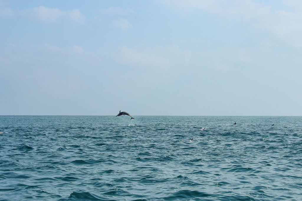 10 days socotra, travel in Socotra, Socotra, Socotra Island, Yemen, Socotra Yemen, Socotra Island Yemen, Yemen Island, Yemen islands, Socotra Archipelago, Yemen, Socotra, Socotra dolphin. Qalansiya, dolphin jump, dolphin jumping, spinner dolphin