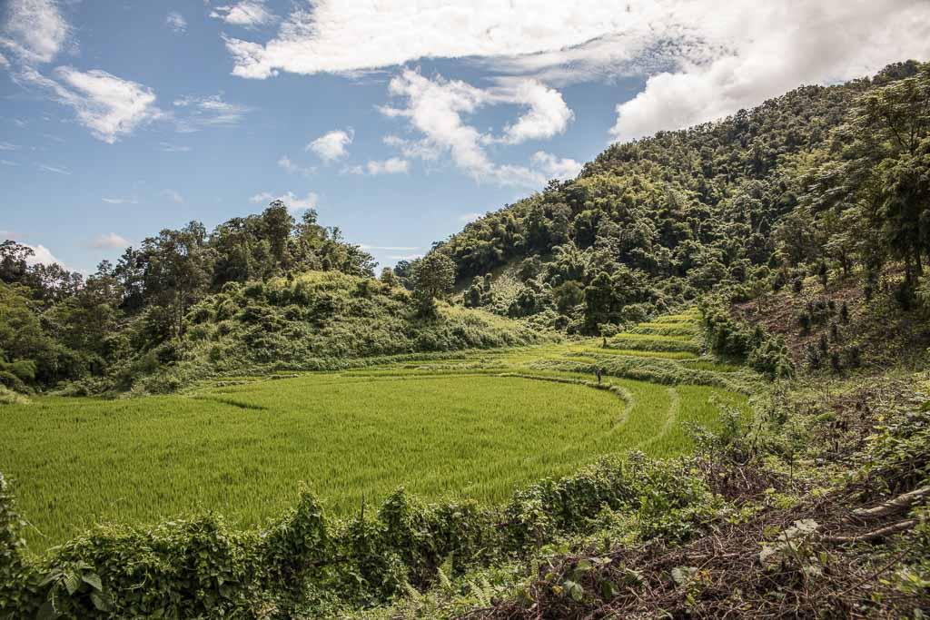 Hsipaw, Hsipaw Trekking, Myanmar Trekking, Myanmar, Shan State, Hsipaw terrace, hsipaw terraces, rice terrace, tea terrace