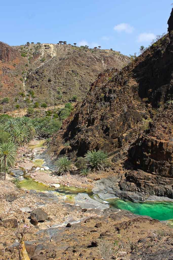 travel in Socotra, Socotra, Socotra Island, Yemen, Socotra Yemen, Socotra Island Yemen, Yemen Island, Yemen islands, Socotra Archipelago, Yemen, dragon blood trees, Dixam, Dixam plateau