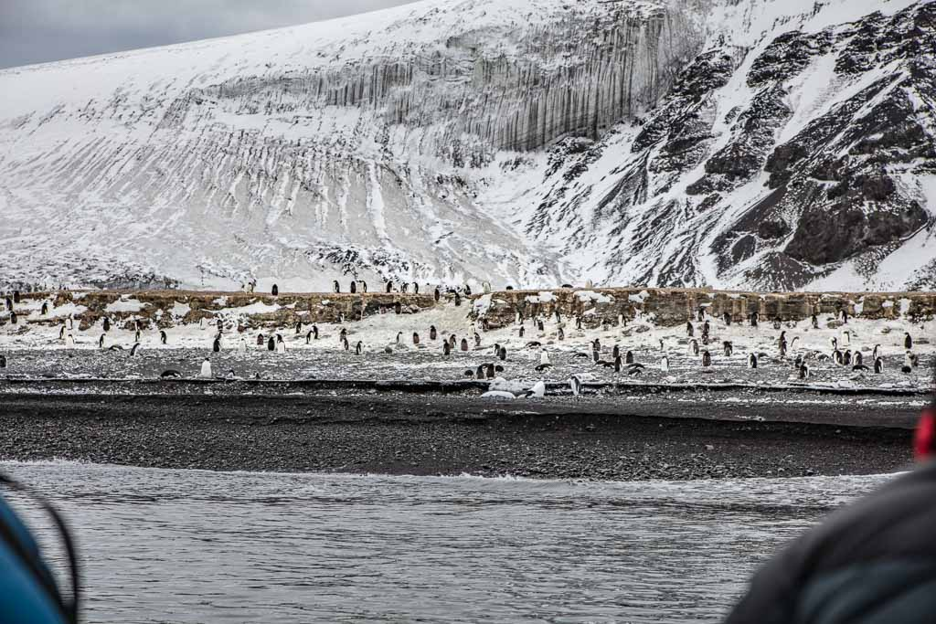 Franklin Island, Franklin Island Antarctica, Bernacchi, Bernacchi Head, Adelie penguins, Adelie rookery, Adelie rookery Franklin Island, Adelie pengion rookery, Adelie penguin rookery Franklin Island