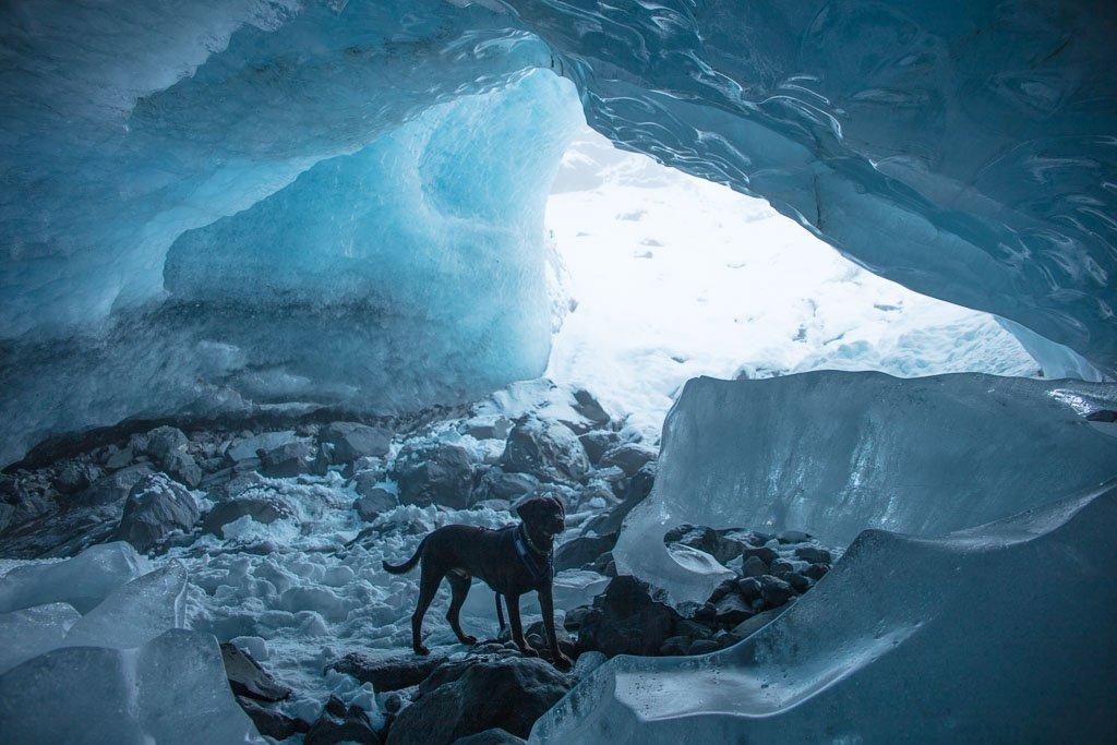 Byron Glacier Ice Cave, Byron Glacier, Girdwood, Alaska, dog glacier