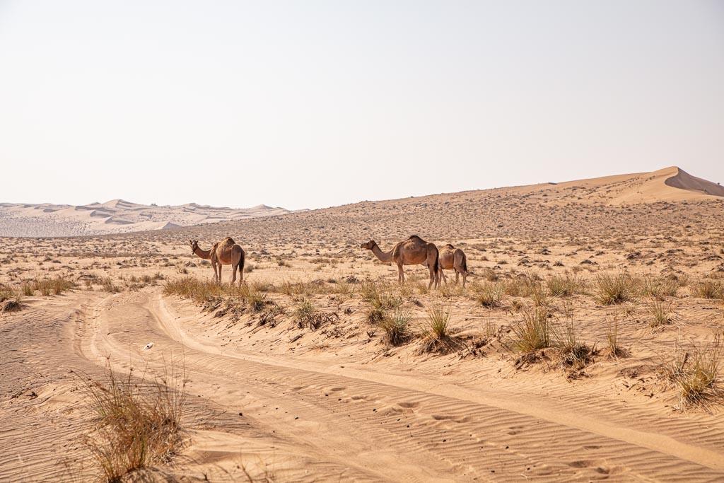 Wahiba, Wahiba Sands, Sharqiya, Sharqiya Sands, Omani Desert, Sand Dunes, Sand Dune, Oman, Middle East, Arabia, Arabian Peninsula