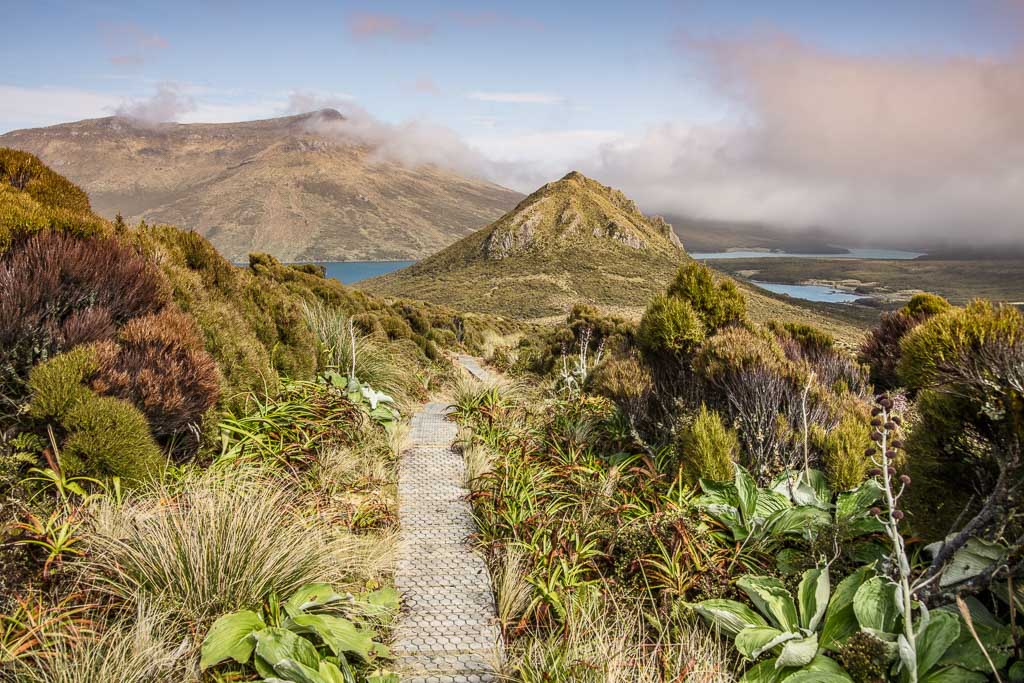 Beeman Hill, Perseverance Harbor, Northwest Bay, Campbell Island, New Zealand, Subantarctic, Subantarctic Islands
