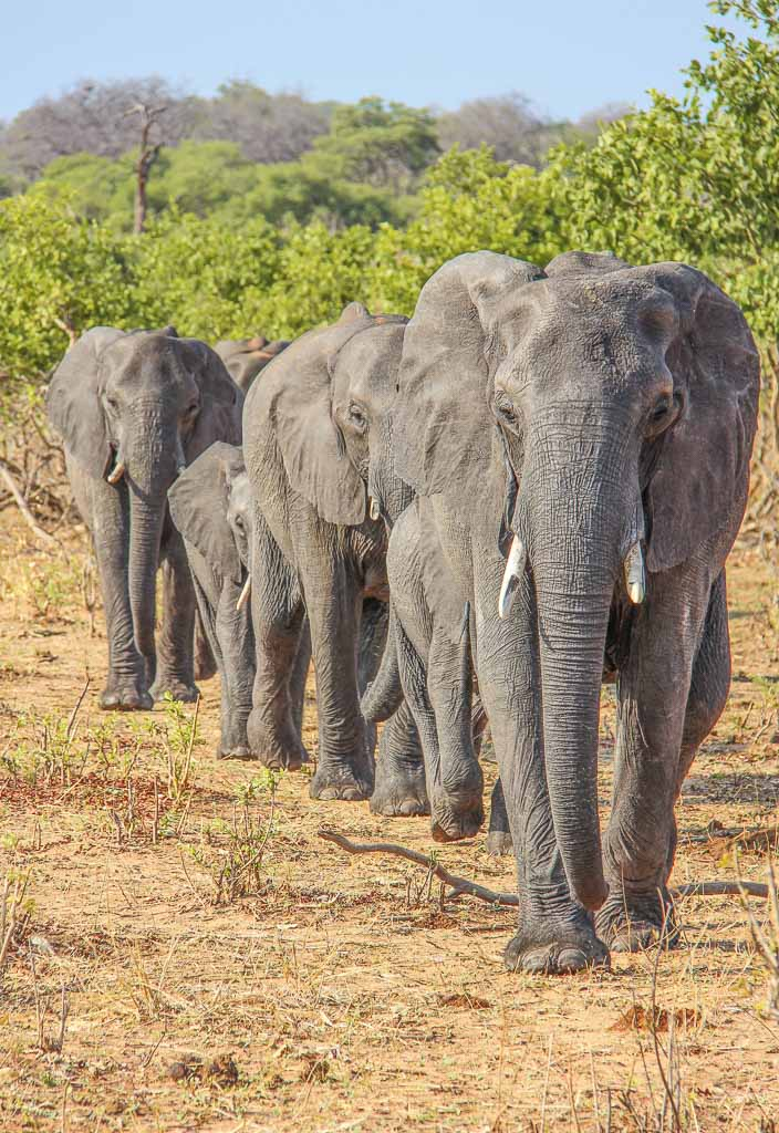 Chobe, Chobe National Park, Botswana, Africa, Elephants, cheap places to travel in summer