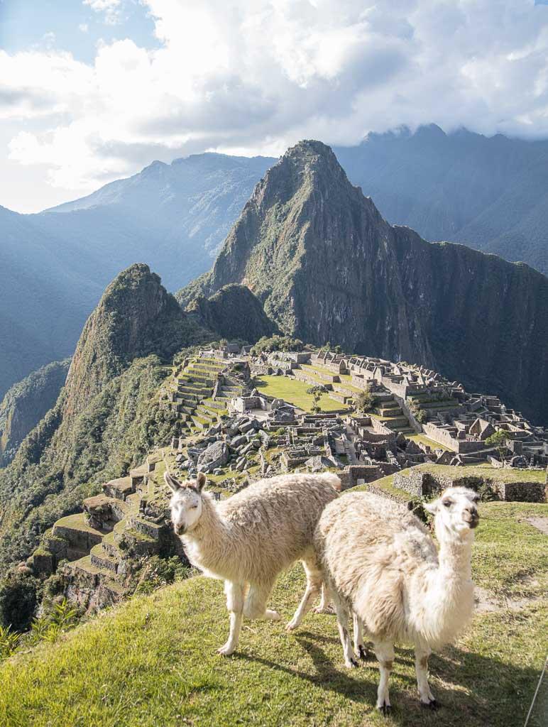 llama, llamas, Machu Picchu, Machu Picchu Peru, Machu Picchu Tips, Peru, Sacred Valley, llama machu picchu, llamas machu picchu, llama peru, llamas peru