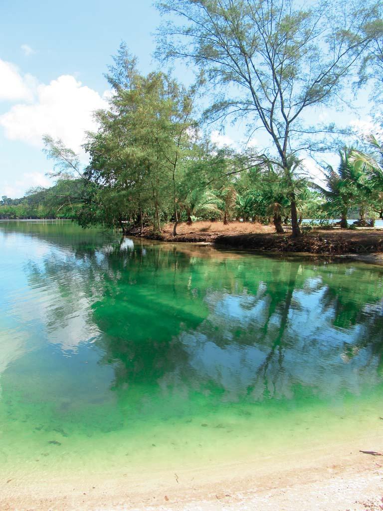 Koh Rong, Cambodia, mangrove