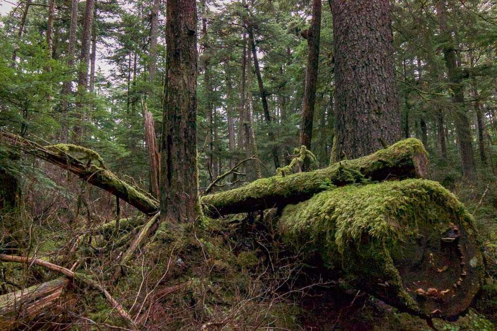 Rainforest Trail, Rainforest Trail Juneau, Lynn Channel, Juneau, Alaska, southeast Alaska, USA