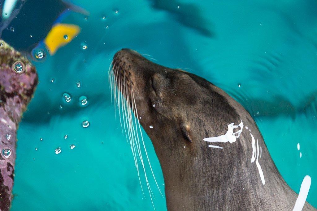 Galapagos, Galapagos Islands, Ecuador, Cheap Galapagos Cruise, Galapagos Cruise, Solitario Jorge, S/C Solitario Jorge, Galapagos Sea Lion, Sea Lion