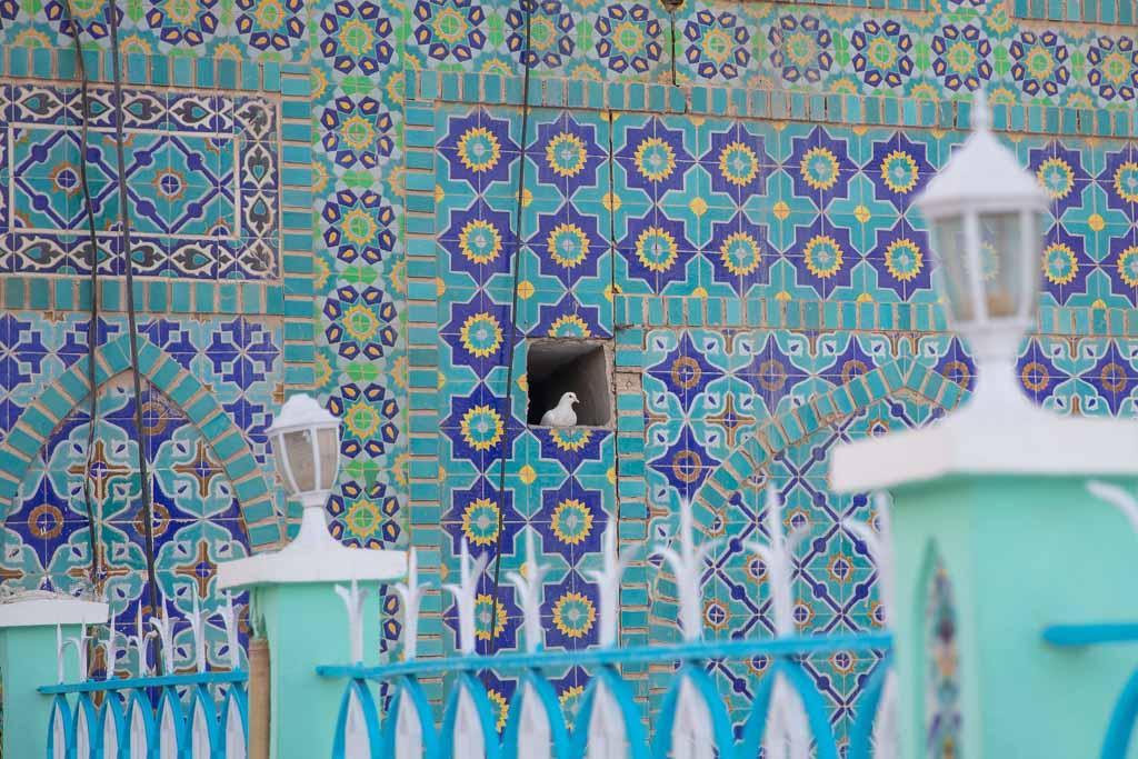 Shrine of Hazrat Ali, Blue Mosque, Blue Mosque Afghanistan, Blue Mosque Mazar e Sharif, Mazar e Sharif, Afghanistan, Balkh, Mazar i Sharif, Mosque, Afghanistan Mosque, Mazar e Sharif Mosque, white dove, Mazar e Sharif dove