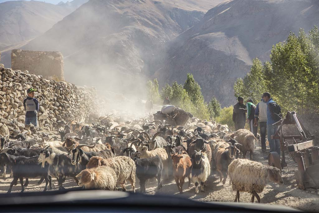 Wakhan Valley, fat tail sheep, Wakhi, GBAO, Pamir, sheep, Wakhan, Tajikistan, Badakshan, Ratm
