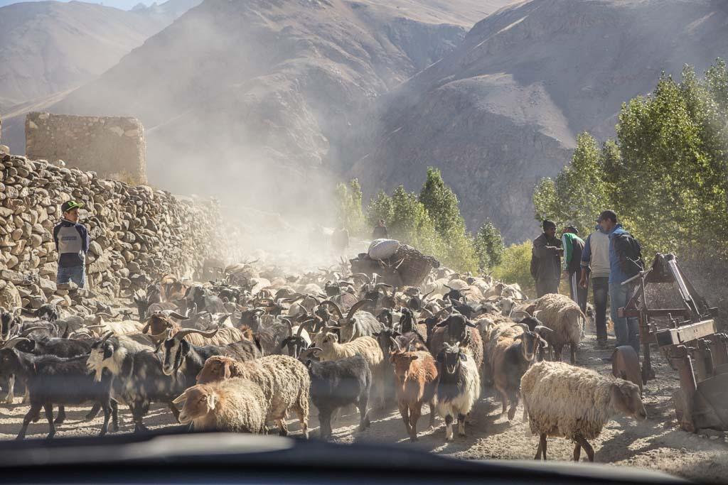 Wakhan Valley, fat tail sheep, Wakhi, GBAO, Pamir, sheep, Wakhan, Tajikistan, Badakshan, Ratm