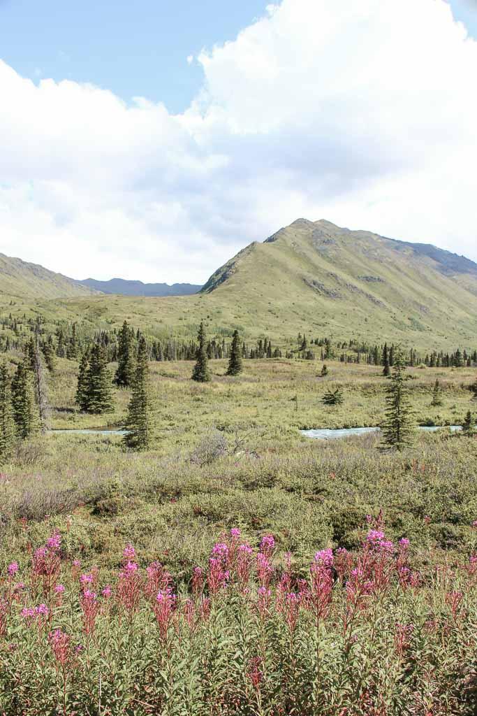Eagle & Symphony Lakes, Symphony Lake, Eagle River, Alaska, Chugach, Chugach State Park, fireweed