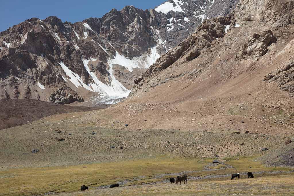 jailoo, Bartang Highway, Bartang Valley, Bartang, Pamir, Pamir Mountains, Pamirs, Tajikistan, GBAO, Gorno Badakshan Autonomous Oblast, Badakshan, Badakhshon, Khafrazdara, Khafrazdara Valley, high pasture