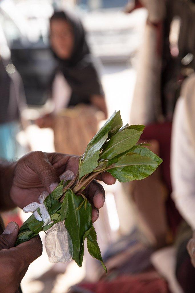 qat, khat, qat leaf, khat leaf