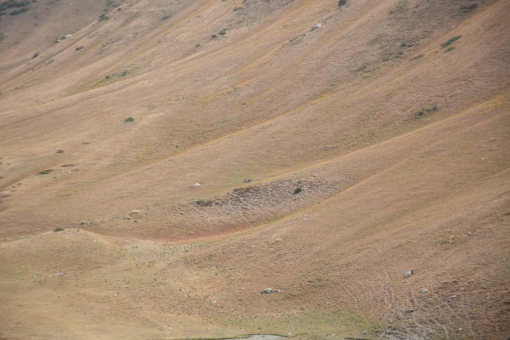 Tupchak, Tupchak Plateau, Gardan i Kaftar, Rasht Valley, Karotegin, Karotegin Valley, Badakshan, GBAO, Tajikistan, Central Asia