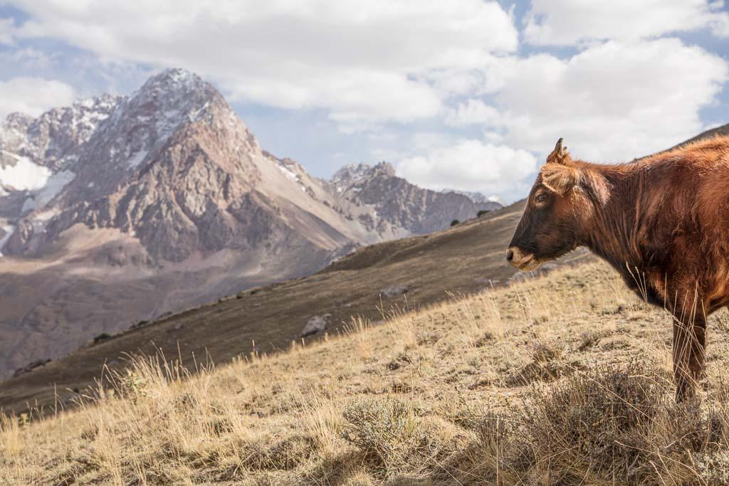 Tavasang, Tavasang Pass, Tajikistan