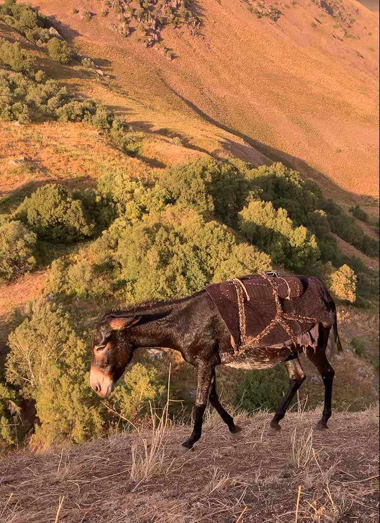 Gardan i Kaftar, Tajikistan