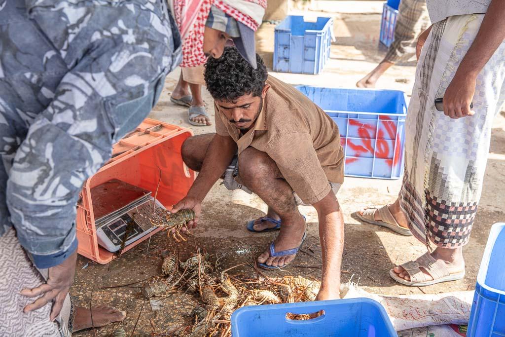 Yemen, al Ghaydeh, al Ghaydeh fish market, Arabia, Middle East, Al Mahrah, Mahrah