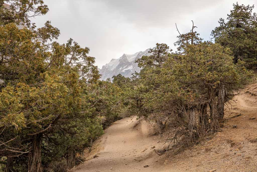 Juniper trees, Archa, Archa trees, Dukdon Pass, Fann Mountains, Sughd, Tajikistan, Central Asia