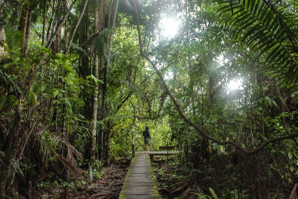 Asia, Malaysia, Borneo, Sarawak, Bako National Park, Bako, Jungle, Rainforest