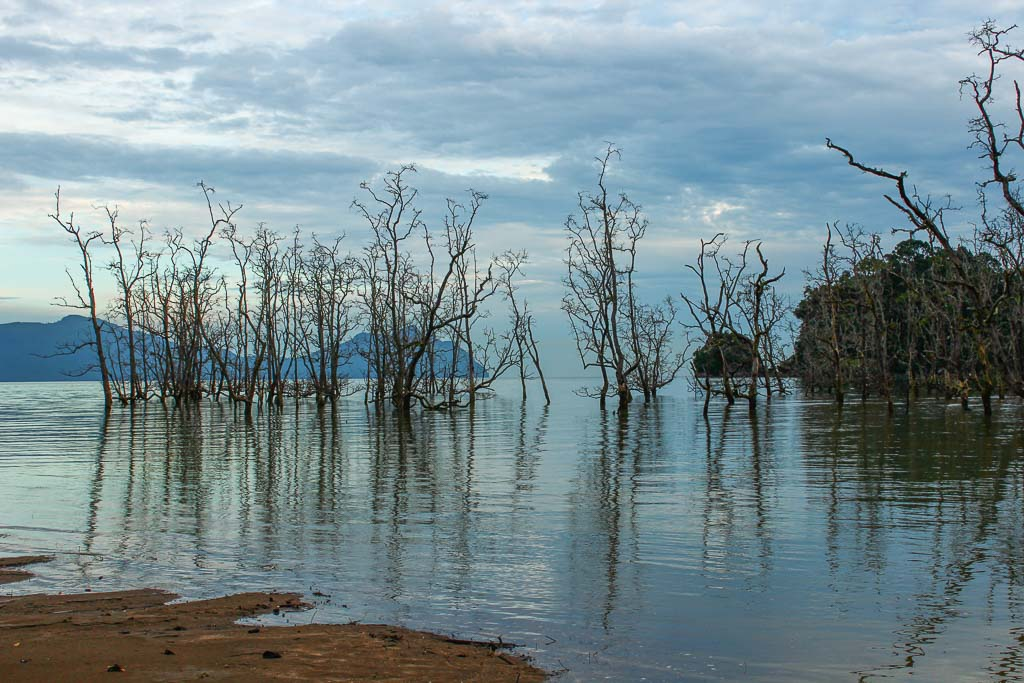 Mangrove, Bako mangrove, Asia, Malaysia, Borneo, Sarawak, Bako National Park, Bako, Jungle, Rainforest