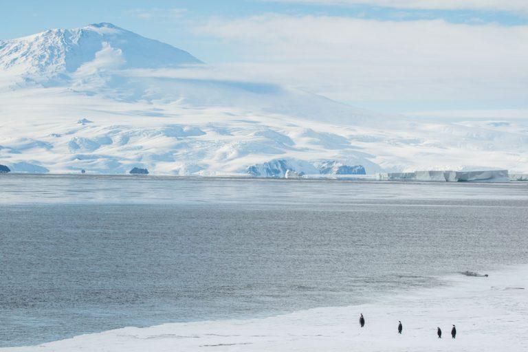Emperor Penguins, Penguins, Mount Erebus, Ross Island, McMurdo Sound, Antarctica